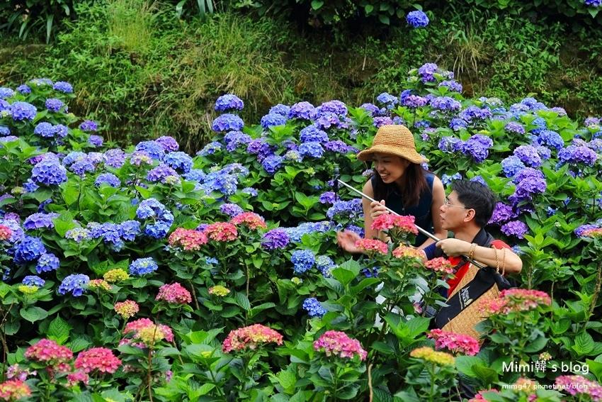 竹子湖繡球花-24.jpg