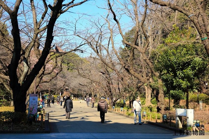 上野動物園-2.jpg