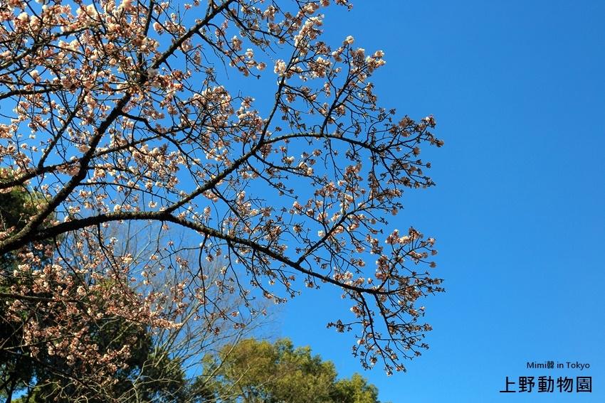 上野動物園-4.jpg