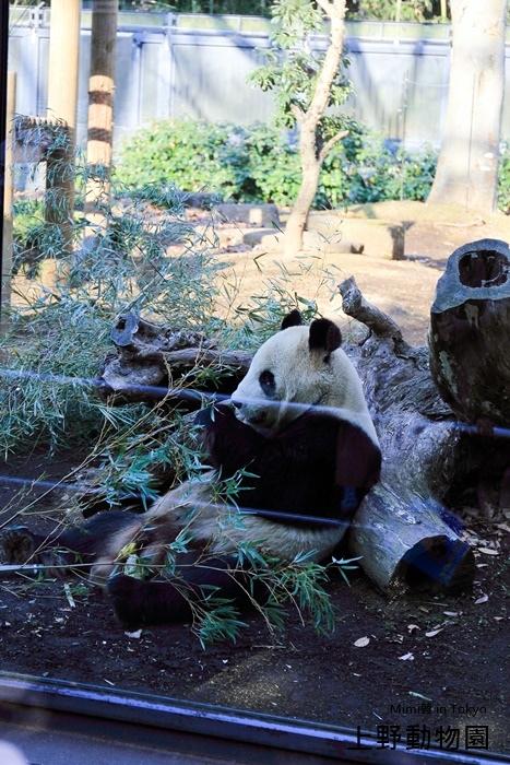 上野動物園-12.jpg