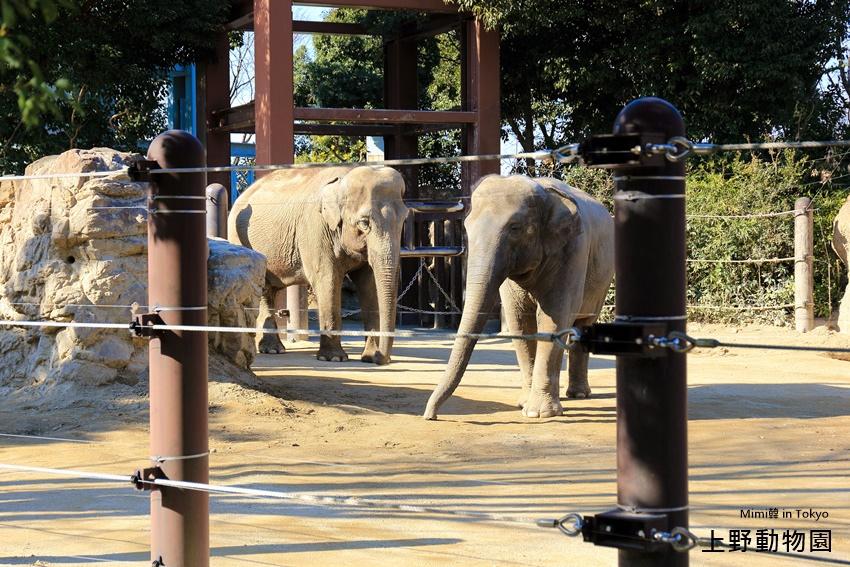 上野動物園-11.jpg