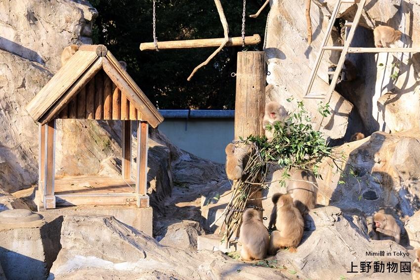 上野動物園-18.jpg