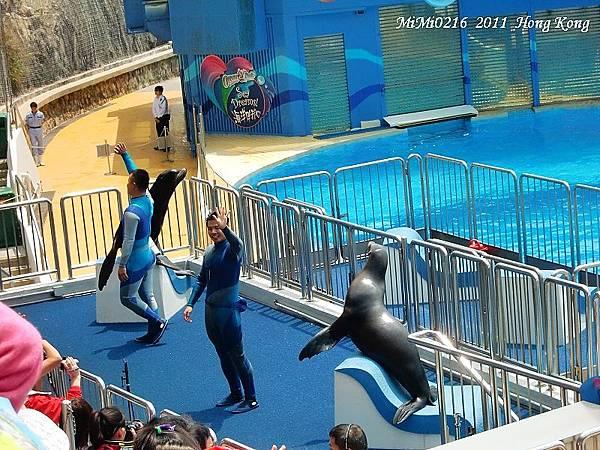 海獅表演。