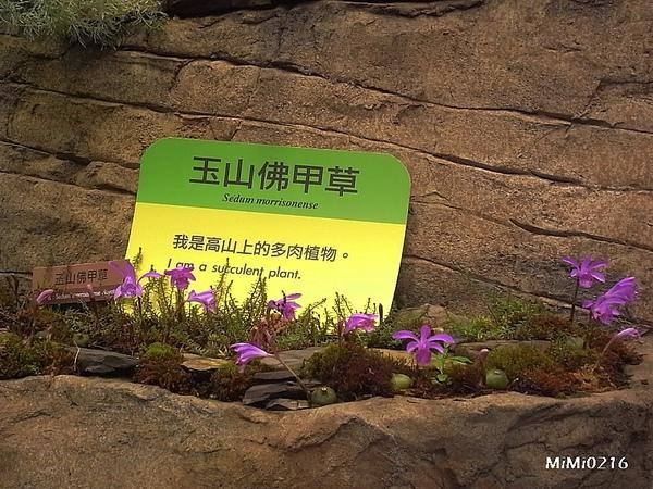 高山植物區,這區特別寒冷喔!