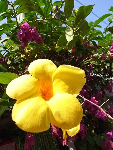 花花世界。