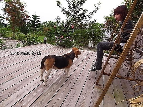 人與狗的對話