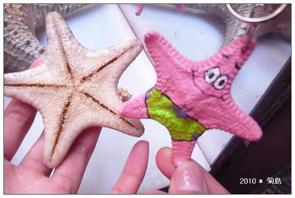 派大星,用真的海星做的噢。