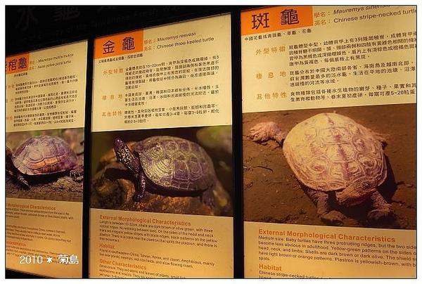 不同種類的烏龜。