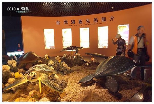 這裡是一比一比例的大烏龜。