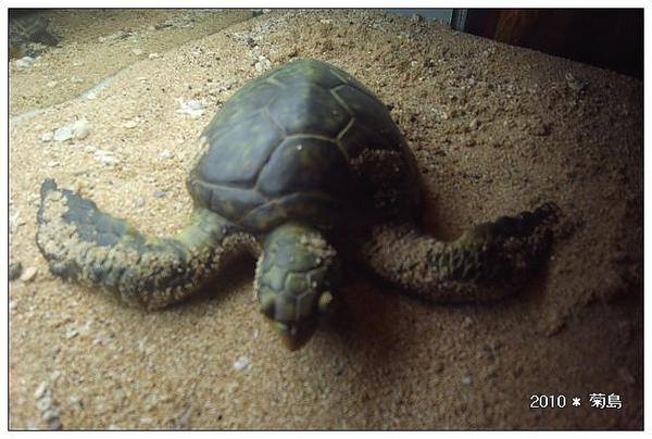 小朋友綠蠵龜。