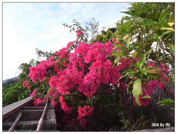 我喜歡這種顏色鮮豔的花。
