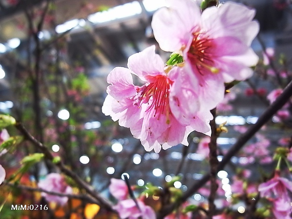 館內展出的花聽說都是真花。(但我們也有發現假的。)