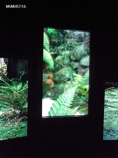 還可以與畫面中多種臺灣特有植物進行同步互動!超酷!