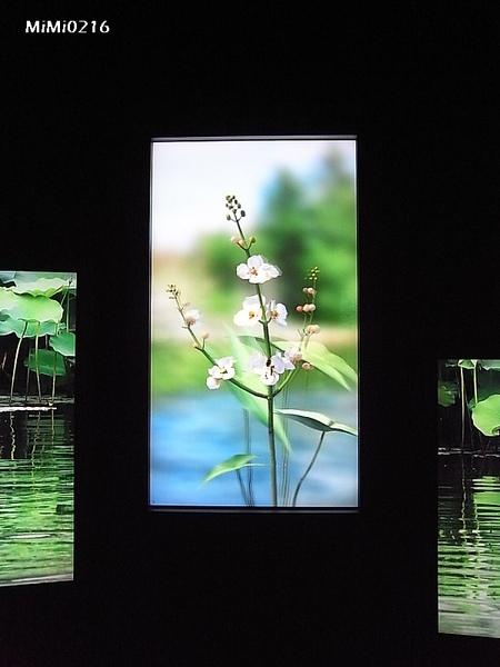 站在大尺寸的直立式螢幕前,不用佩戴特殊眼鏡,就能看到逼真的3D立體影像喔!