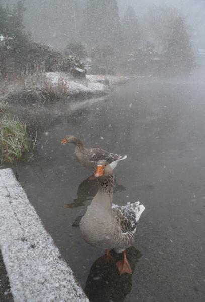 20120208 由布院 金麟湖-5