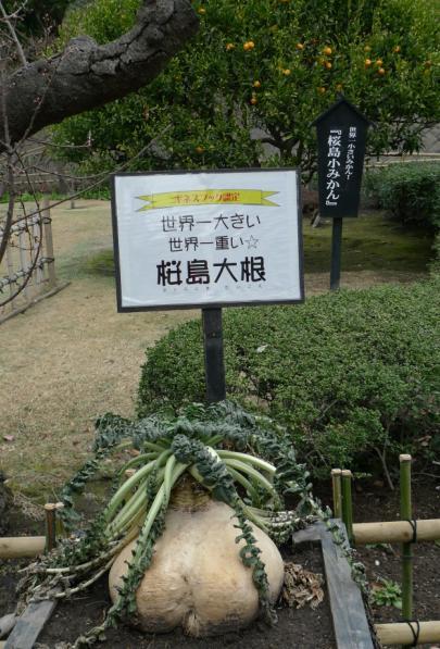 20120210 鹿兒島 仙嚴園-2