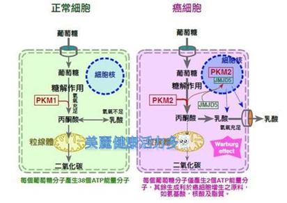 癌細胞糖作用機轉logo