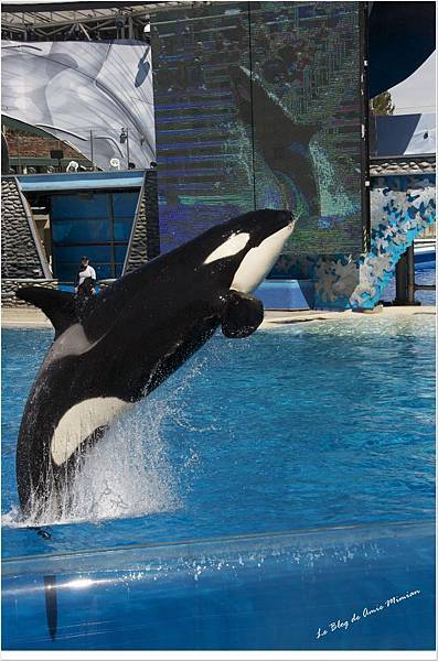 SanDiego-SeaWorld - 12.jpg