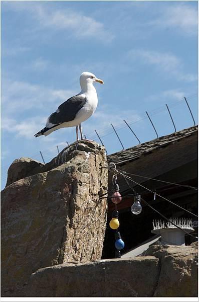 SanDiego-SeaWorld - 14.jpg