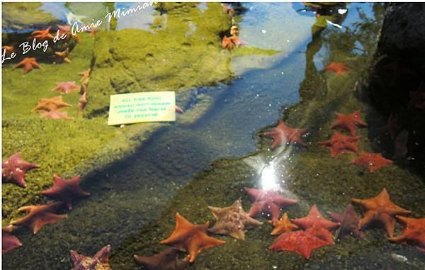 SanDiego-SeaWorld - 24.jpg