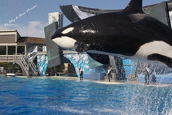 SanDiego-SeaWorld - 33.jpg