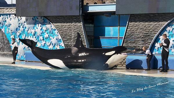 SanDiego-SeaWorld - 34.jpg