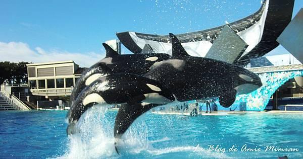 SanDiego-SeaWorld - 35.jpg