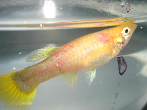 魚病-1.JPG