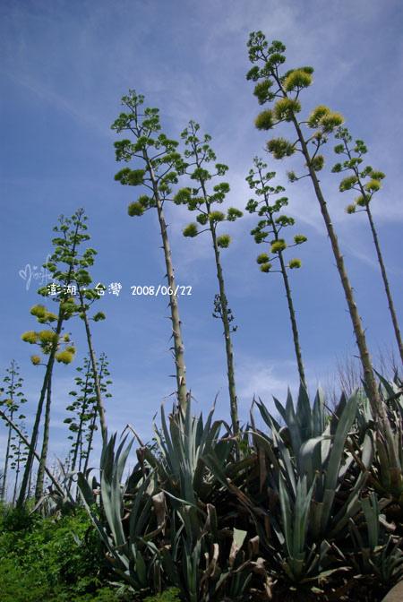 2008/06/20~2008/06/22 澎湖之旅~第3天