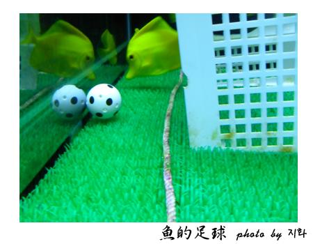 fish soccer.png