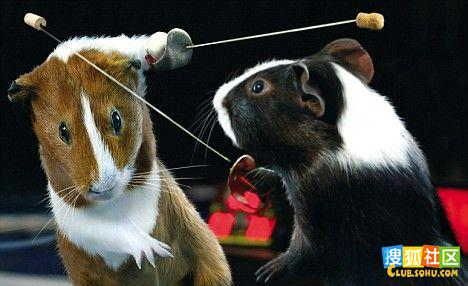 老鼠運動會5.jpg