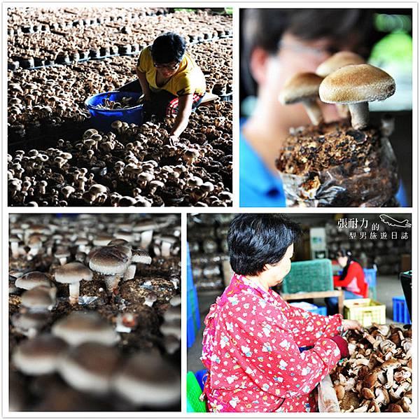 上安香菇園 拷貝.jpg