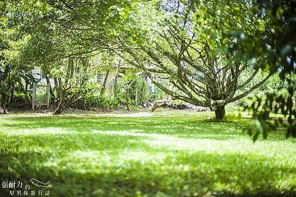 綠地草皮 拷貝.jpg