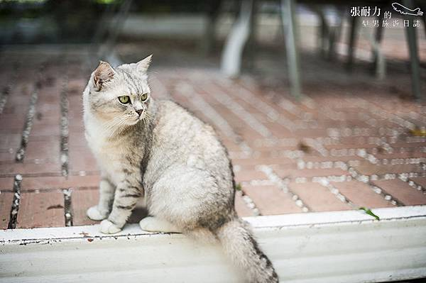 貓二 拷貝.jpg