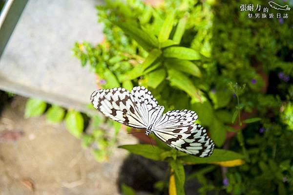 蝴蝶 拷貝.jpg