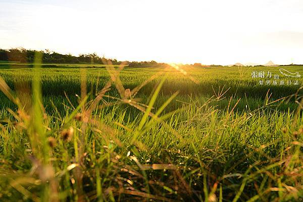 外觀草地 拷貝.jpg