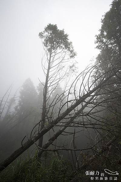 望洋山 山林 拷貝.jpg