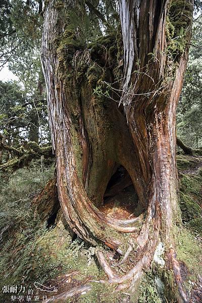 望洋山 吃人樹 拷貝.jpg