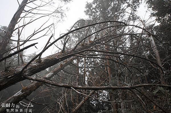 望洋山 林木 拷貝.jpg