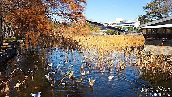 湖畔小鳥 拷貝.jpg
