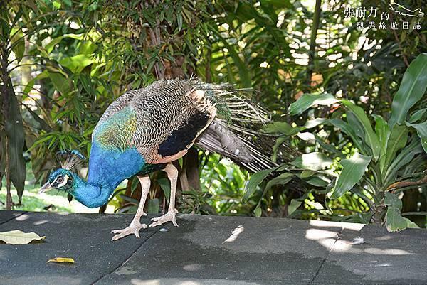 吉隆坡鳥園-6 拷貝.jpg