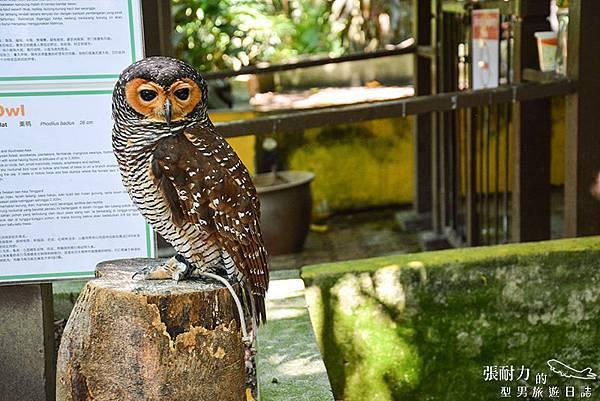 吉隆坡鳥園-13 拷貝.jpg