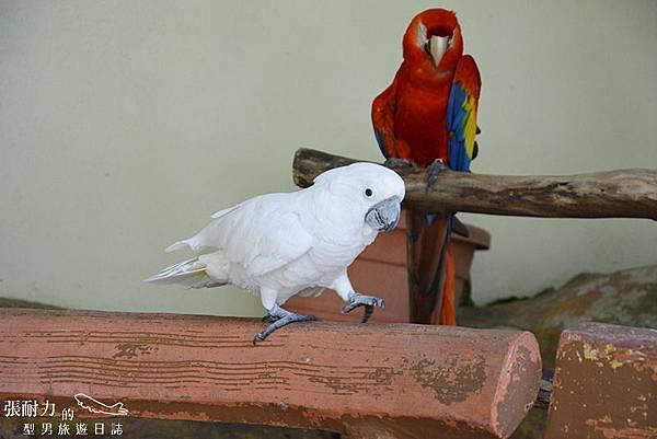 吉隆坡鳥園-28 拷貝.jpg