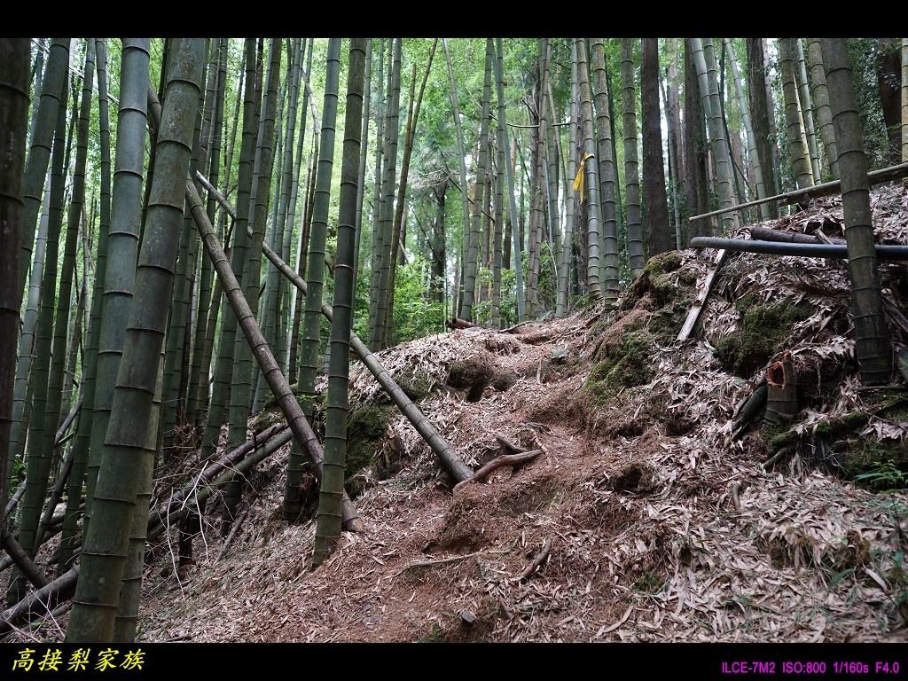 PhotoCap_037.jpg