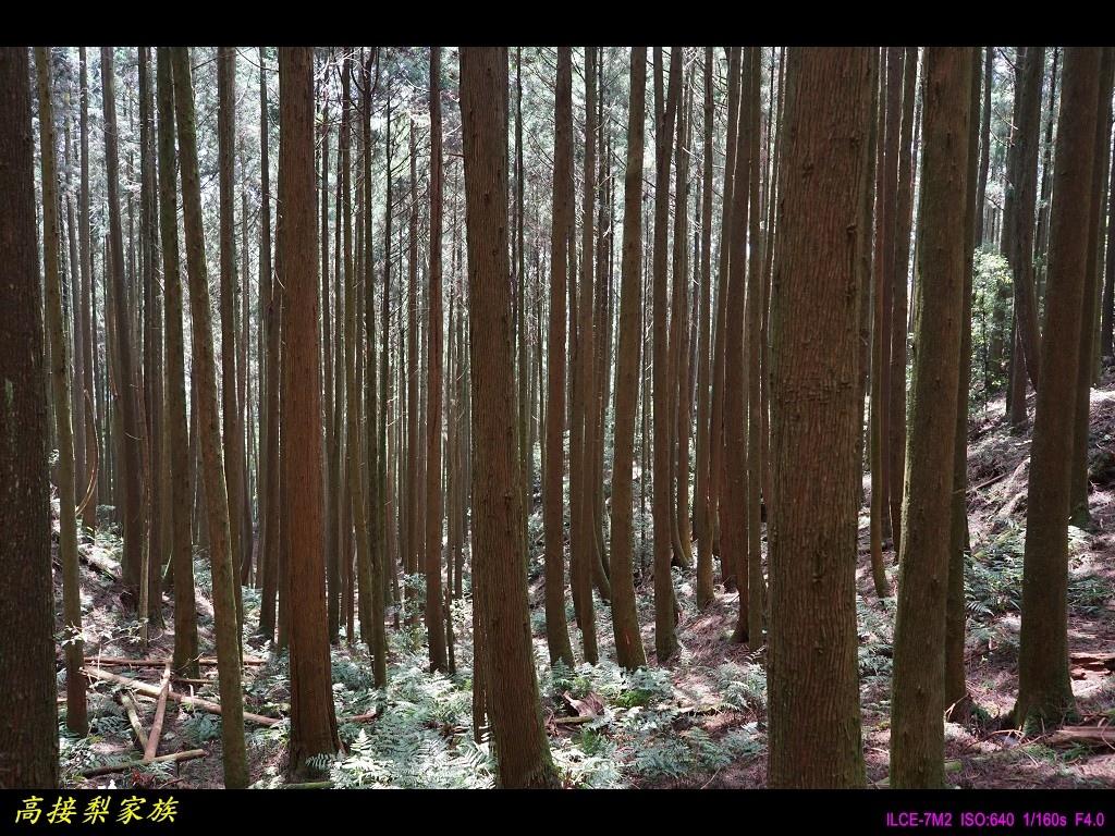 PhotoCap_049.jpg
