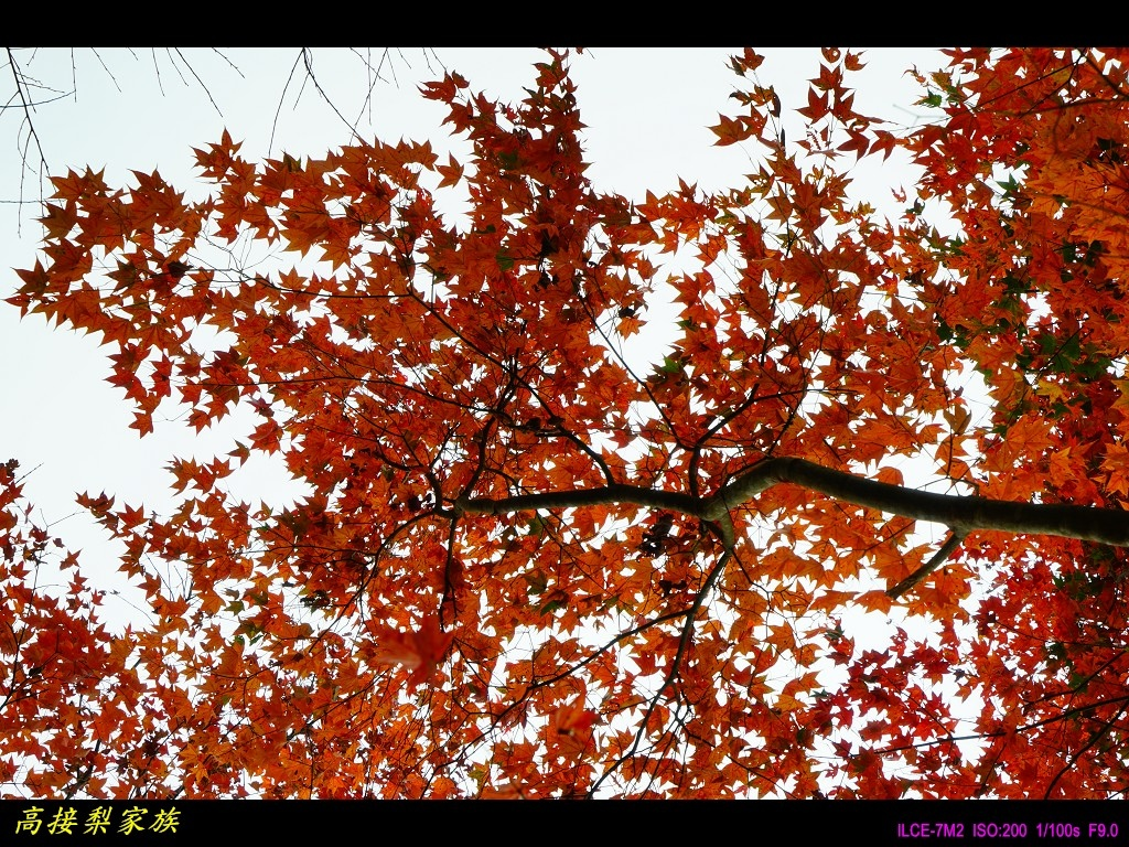 PhotoCap_021.jpg