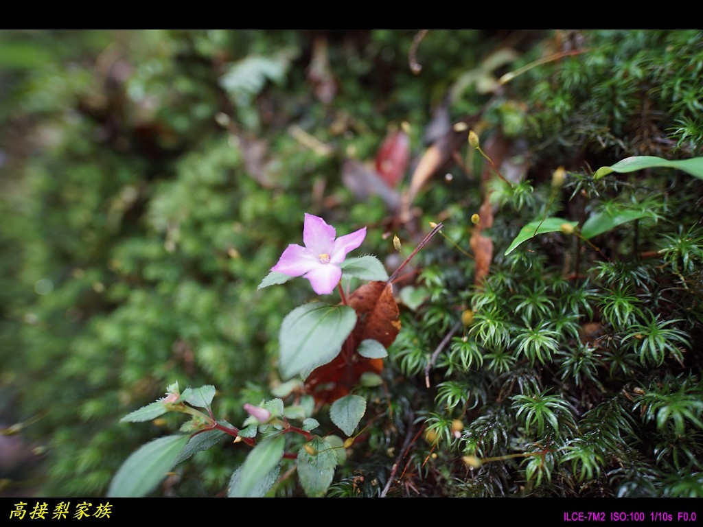 PhotoCap_039.jpg