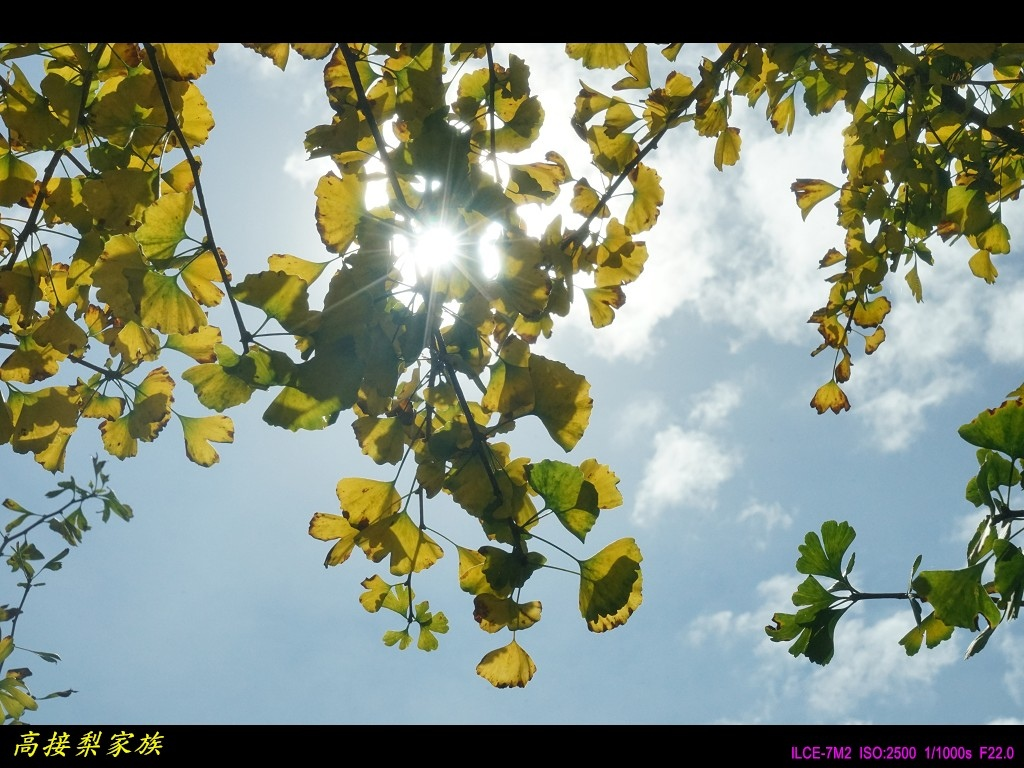 PhotoCap_054.jpg