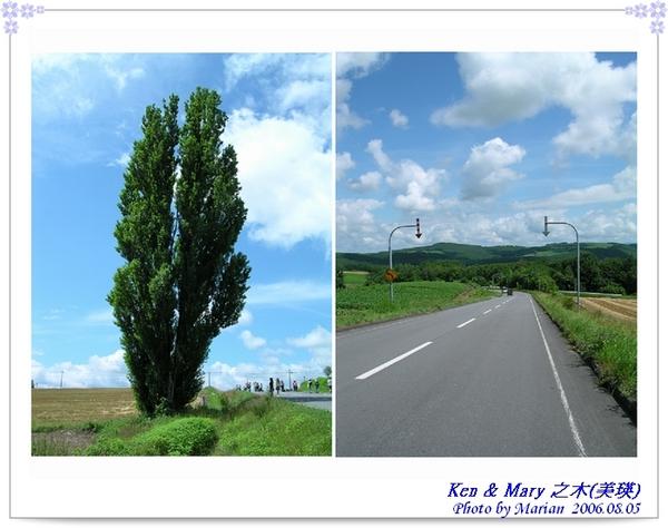 060805_11_Ken & Mary之木.jpg