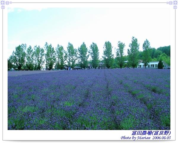 060805_21_富田農場.jpg